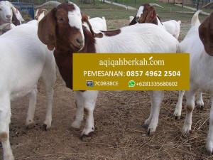 Jasa Aqiqah di Kuala Pembuang