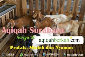 aqiqahsurabaya1