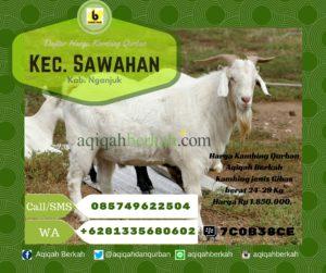 Harga Kambing Qurban Sawahan