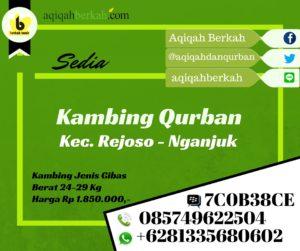 Kambing Qurban Rejoso