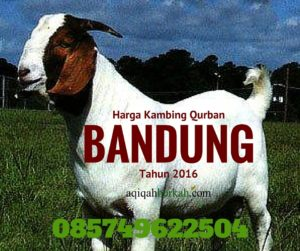 harga Kambing Qurban Bandung Tahun 2016