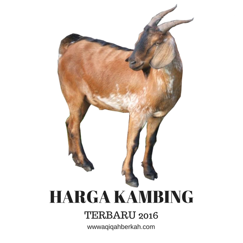 HARGA KAMBING