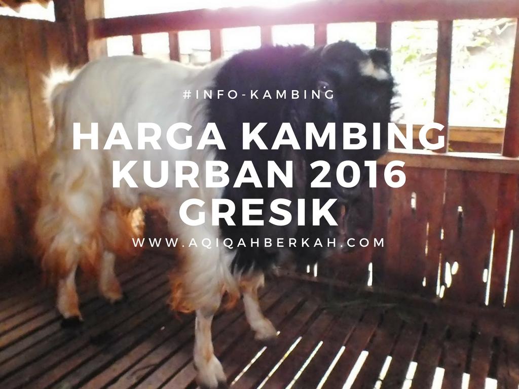 harga kambing kurban 2016 gresik (1)