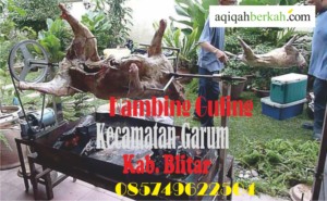 Kambing Guling Kecamatan Garum Blitar